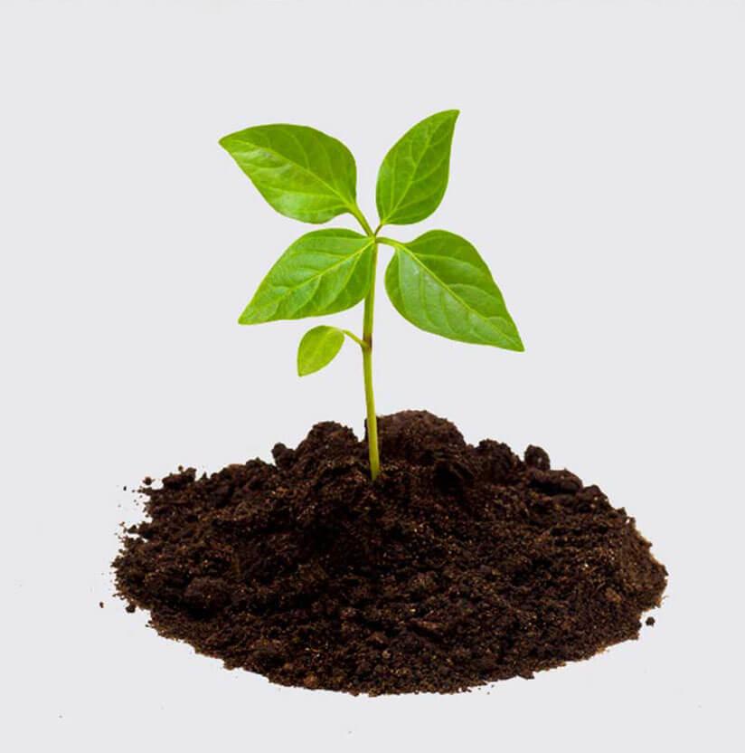 Plant in soil set against white backdrop
